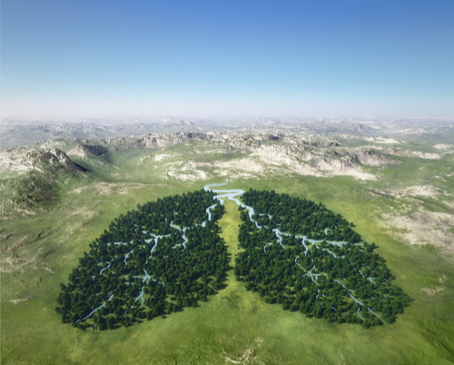 server recycling image showing a thick growth trees in the shape of human lungs